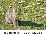 cat on the lawn among the white ... | Shutterstock . vector #1109422265