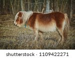 little brown pony grazes near... | Shutterstock . vector #1109422271