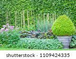 evergreen boxus topiary cone...   Shutterstock . vector #1109424335