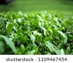 wazuka village home of friendly ... | Shutterstock . vector #1109467454