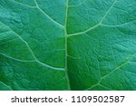 green vegetative texture from a ... | Shutterstock . vector #1109502587