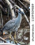 "Small photo of Spotted at J.N. ""Ding"" Darling National Wildlife Refuge, Sanibel Island, Florida"
