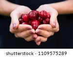 fresh fruit red cherry in woman ... | Shutterstock . vector #1109575289