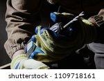 photo of a closeup carpenter...   Shutterstock . vector #1109718161
