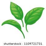 basil leaves vector flat...   Shutterstock .eps vector #1109721731