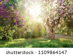 beautiful landscape with old... | Shutterstock . vector #1109864147
