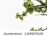 golden green leaves and... | Shutterstock . vector #1109870105