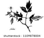 nifty gentle hand drawn...   Shutterstock .eps vector #1109878004