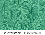 vector texture with banana... | Shutterstock .eps vector #1109884304