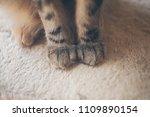 Close Up View Cat Paws - Fine Art prints
