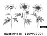 sketch floral botany collection.... | Shutterstock .eps vector #1109933024