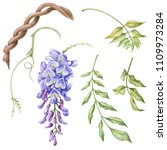 Watercolor Elements Of Wisteri...