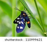 Butterfly Sits On A Stalk Of...