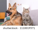 Stock photo adorable cat and dog resting together on sofa indoors animal friendship 1110019571