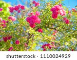 image of uncultivated wild... | Shutterstock . vector #1110024929