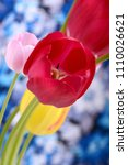 close up of red tulips blooming ... | Shutterstock . vector #1110026621