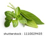 thyme fresh herb and sage... | Shutterstock . vector #1110029435