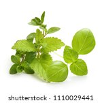 fresh spices and herbs isolated ... | Shutterstock . vector #1110029441