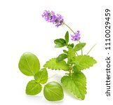 green mint leaves isolated on a ... | Shutterstock . vector #1110029459