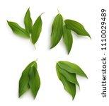 green leaves isolated on white... | Shutterstock . vector #1110029489