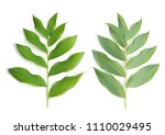 twig with green leaves isolated ... | Shutterstock . vector #1110029495