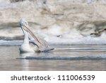 dalmatian pelican in winter | Shutterstock . vector #111006539