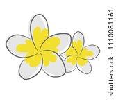 plumeria flower or frangipani... | Shutterstock .eps vector #1110081161