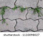 weeds grow in the crack of the... | Shutterstock . vector #1110098027