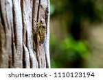 cicada is on a tree in a warm... | Shutterstock . vector #1110123194