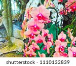 orchids flower  orchids closed... | Shutterstock . vector #1110132839