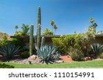 Saguaro  Carnegiea Gigantea ...