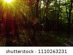 bright sunlight beaming through ...   Shutterstock . vector #1110263231
