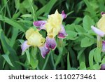summer bright flowers in the... | Shutterstock . vector #1110273461