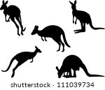Kangaroo Collection Vector