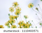 soft focus blurred background ... | Shutterstock . vector #1110403571