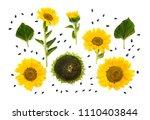 flowers of sunflower  mature... | Shutterstock . vector #1110403844