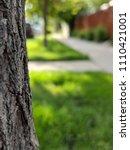 bark and sidewalks    Shutterstock . vector #1110421001