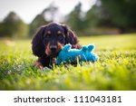 Stock photo puppy playing with a blue squeak toy 111043181