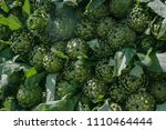 artichokes in agricultural... | Shutterstock . vector #1110464444