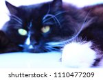 feline muzzle lying and... | Shutterstock . vector #1110477209