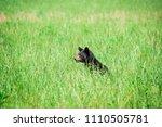 horizontal shot of a black bear ...   Shutterstock . vector #1110505781