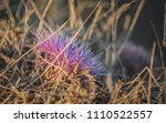 front view of isolated dry... | Shutterstock . vector #1110522557