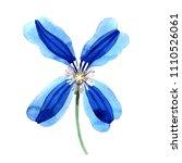 blue durandii clematis. floral...   Shutterstock . vector #1110526061