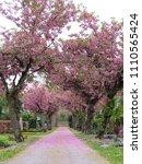 Colorful Spring Graveyard