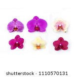 collage with beautiful orchid... | Shutterstock . vector #1110570131