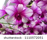 fresh beautiful vivid orchid... | Shutterstock . vector #1110572051