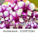 beautiful vivid pink orchid... | Shutterstock . vector #1110572261