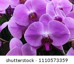 fresh beautiful vivid pink... | Shutterstock . vector #1110573359
