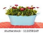 pink bellis flowers in blue... | Shutterstock . vector #111058169