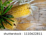 Small photo of Banksia Australian native flower on natural wood background, wild flowers with leaves. Botanical arrangements.